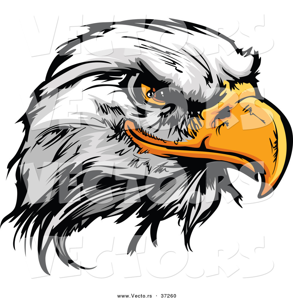 Bald Eagle Masco   Eagle Head Vector