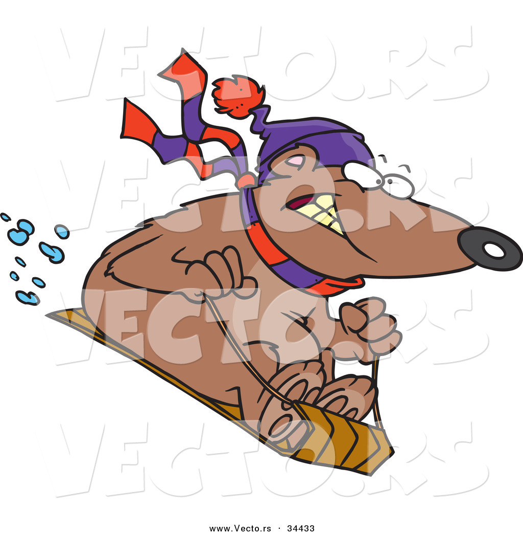 ... of a Nervous Cartoon Bear Snow Sledding by Ron Leishman - #34433