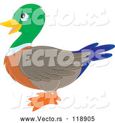 Cartoon Vector of Cute Mallard Duck in Profile by Alex Bannykh