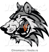 Vector of a Adult Gray Wolf Snarling and Growling by Chromaco