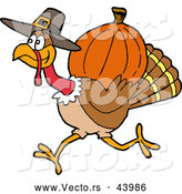 Vector of a Cartoon Pilgrim Turkey Carrying a Pumpkin for Thanksgiving by LaffToon