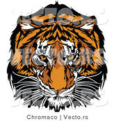Vector of a Dominant Adult Tiger Mascot Staring with Intimidating Eyes by Chromaco