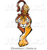 Vector of a Prowling Tiger Walking Forward by Chromaco