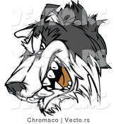 Vector of a Snarling Husky Mascot Growling by Chromaco