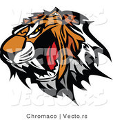 Vector of a Strong Growling Tiger Baring Sharp Teeth by Chromaco