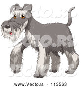 Vector of a Walking Cartoon Salt and Pepper Gray Schnauzer Dog by Graphics RF