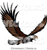 Vector of an Adult Bald Eagle Screeching While Flying by Chromaco