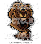 Vector of an Alpha Cartoon Bear Walking Dominantly Forward While Staring with Intimidating Eyes by Chromaco