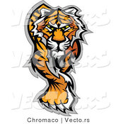 Vector of an Alpha Cartoon Tiger Walking Dominantly Forward While Staring with Intimidating Eyes by Chromaco