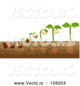 Vector of Bean Plant by Graphics RF