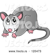 Vector of Cartoon Australian Possum by Visekart