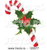 Vector of Cartoon Christmas Peppermint Candy Cane with Holly by Pushkin