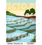 Vector of Cartoon Rice Paddy Terraces by Graphics RF