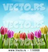 Vector of Colorful Spring Tulip Flowers Under a Blue Sky with Puffy Clouds by Elaineitalia