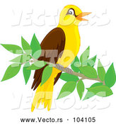 Vector of Cute Oriole Bird Perched on a Branch by Alex Bannykh