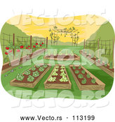 Vector of Garden of Raised Beds with Vegetables by BNP Design Studio