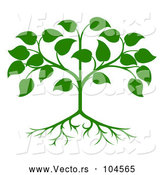 Vector of Green Seedling Tree with Leaves and Roots by AtStockIllustration