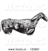 Vector of Retro Vintage Engraved Horse Anatomy of Internal Bones Organs in Black and White by Picsburg