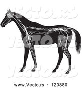 Vector of Retro Vintage Horse Anatomy of the Nervous System in Black and White by Picsburg