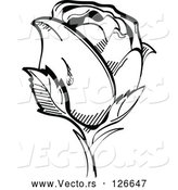 Vector of Single Black and White Rose by Andy Nortnik