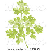 Vector of Sprig of Fresh Green Parsley by Any Vector