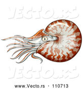Vector of Swimming Nautilus by Graphics RF