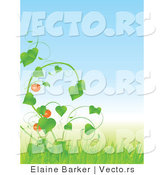 Vector of Tomatoes Growing on Green Vine with Tall Grass Against Blue Sky Background by Elaineitalia