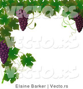 Vector of Vines and Purple Grapes Border Design by Elaineitalia
