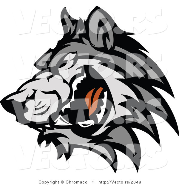 Vector of a Adult Gray Wolf Snarling and Growling