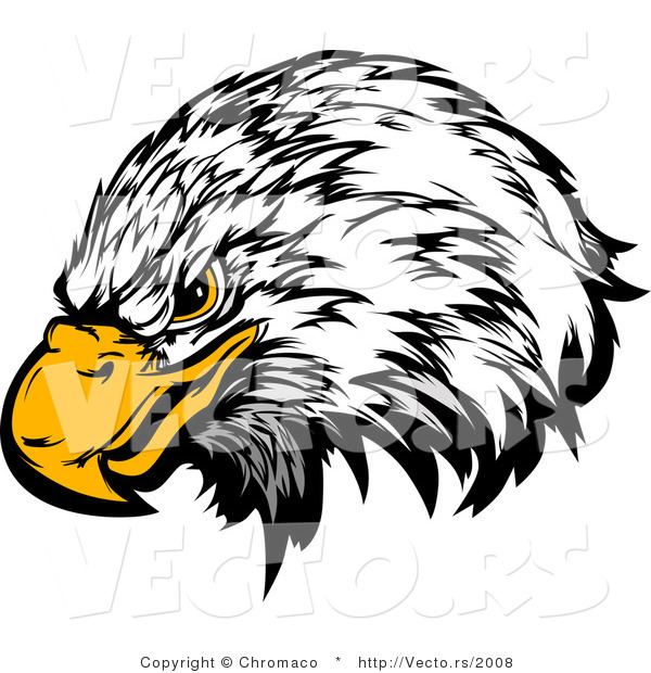Vector of a Bald Eagle with Intimidating Eyes