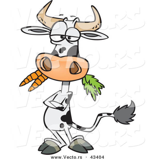Vector of a Cartoon Cow Eating Carrots While Standing with His Arms Crossed