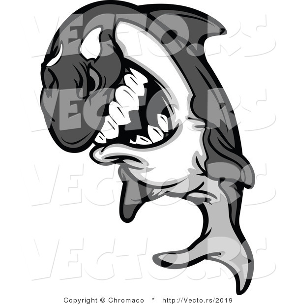 Vector of a Competitive Cartoon Killer Whale Orca Mascot Grinning While Staring with Intimidating Eyes