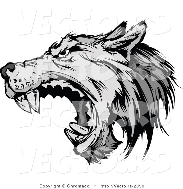 Vector of a Defensive Gray Wolf Attacking