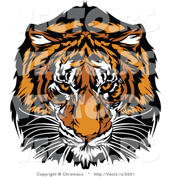 Vector of a Dominant Adult Tiger Mascot Staring with Intimidating Eyes
