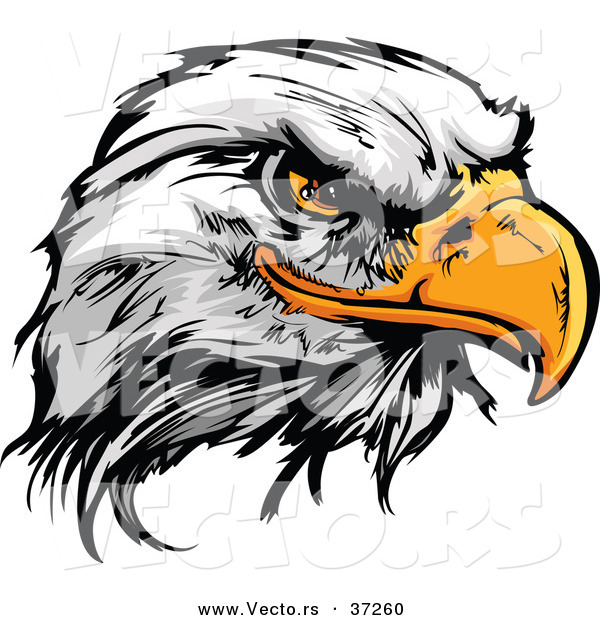 Vector of a Fearless Cartoon Styled Bald Eagle Mascot Head