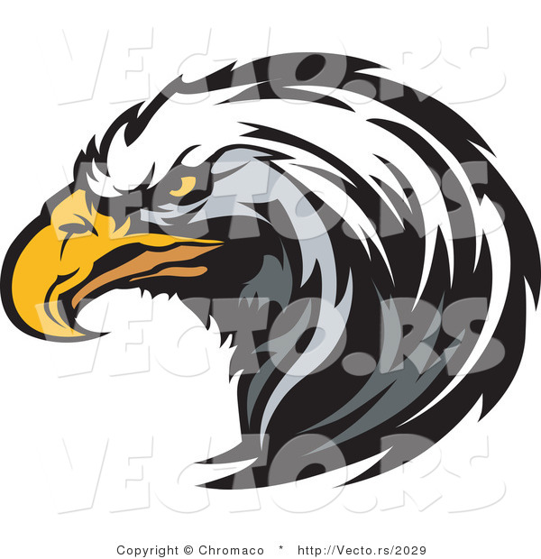 Vector of a Focused American Bald Eagle