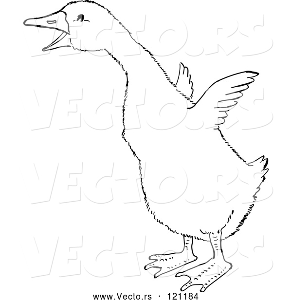 Vector of a Gosling Flapping Wings - Retro Black and White Style