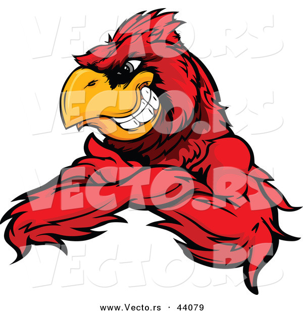 Vector of a Grinning Cartoon Red Cardinal Bird Mascot with Arms Crossed