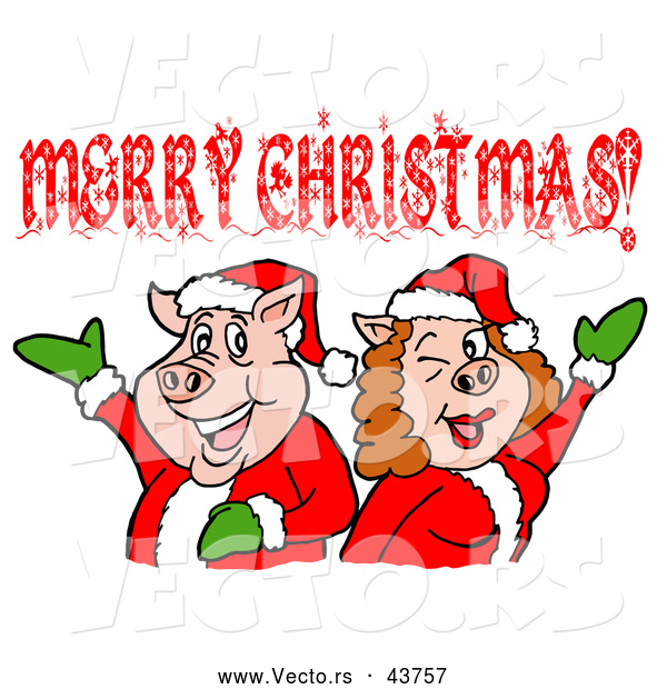 Vector of a Happy Cartoon Pig Couple Wearing Santa Outfits While Celebrating Merry Christmas
