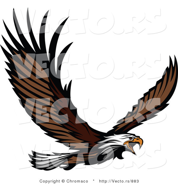 Vector of an Adult Bald Eagle Screeching While Flying
