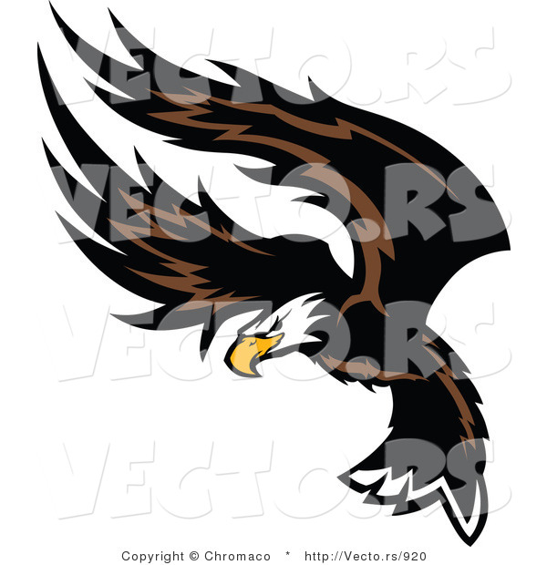 Vector of an American Bald Eagle Flapping Wings During Flight