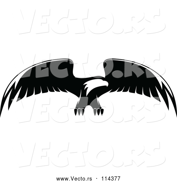 Vector of Bald Eagle Flying - Black and White