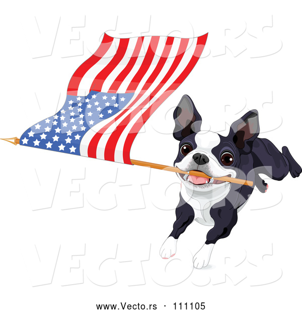 Vector of Boston Terrier or French Bulldog Running with an American Flag