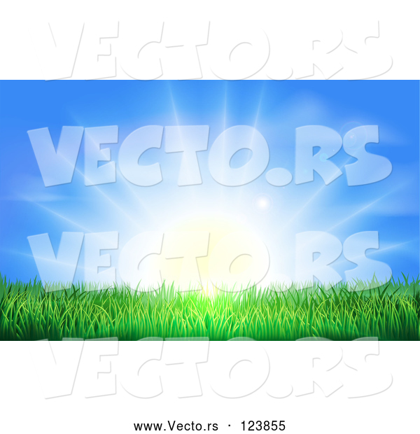 Vector of Bright Sun Shining over Green Grass