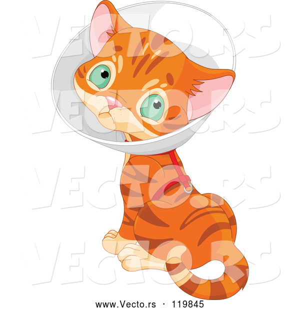 Vector of Cartoon Ginger Kitten Wearing a Cone Elizabethan Collar