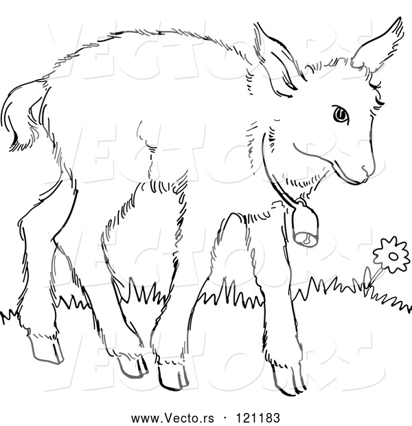 Vector of Cartoon Retro Vintage Black and White Baby Goat with a Bell Line Drawing