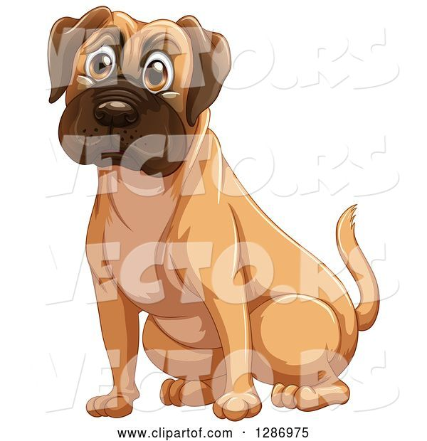 Vector of Fawn Boxer or Mastiff Dog Sitting