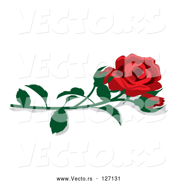 Vector of Fully Bloomed Single Red Rose and Bud with a Stem