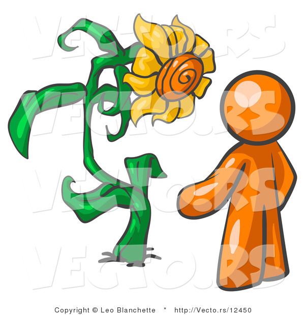 Orange Man Proudly Standing Front His Giant Sunflower