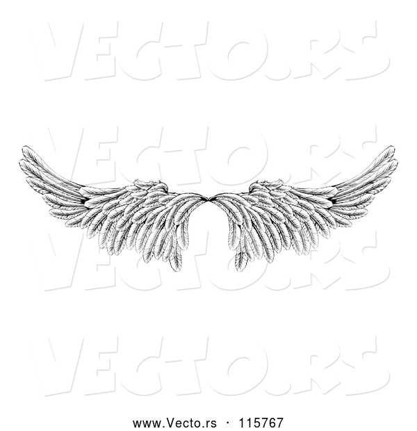 Vector of Pair of Black and White Angel or Eagle Wings